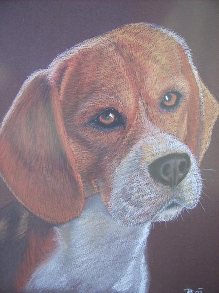 Zeichnungen, Tiere, Beagle