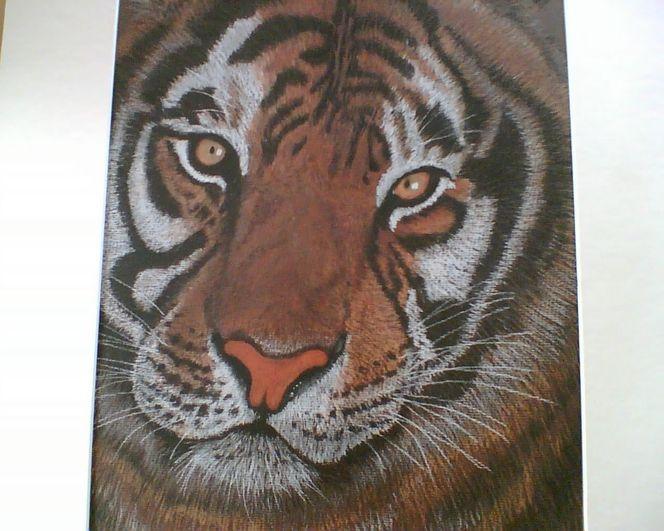 Tierportrait, Tiger, Wildtiere, Tiere, Katze, Pastellmalerei