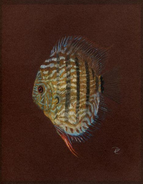 Diskus, Tiere, Wasser, Pastellmalerei, Fisch, Zeichnungen