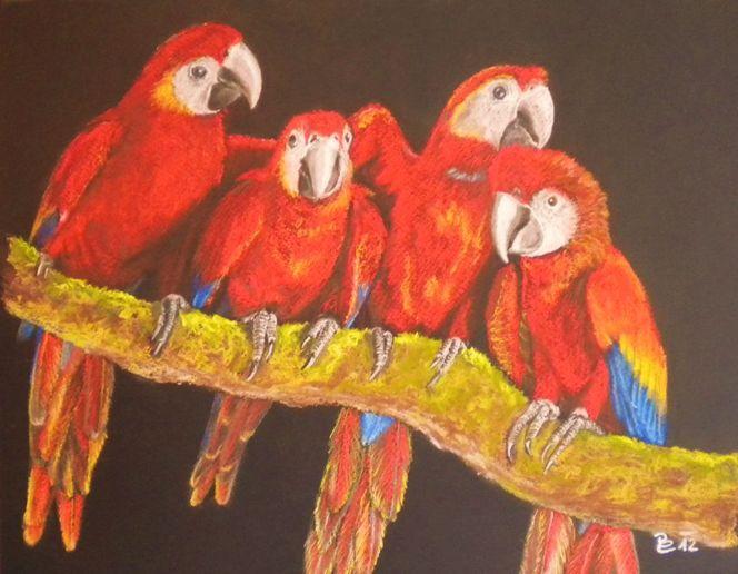 Freunde, Vogel, Tierportrait, Papagei, Pastellmalerei, Natur
