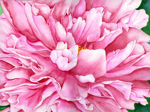 Blumen, Bunt, Rose, Aquarellmalerei, Pfingstrose, Frühling