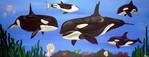 Wal, Schwertwal, Meer, Tiere