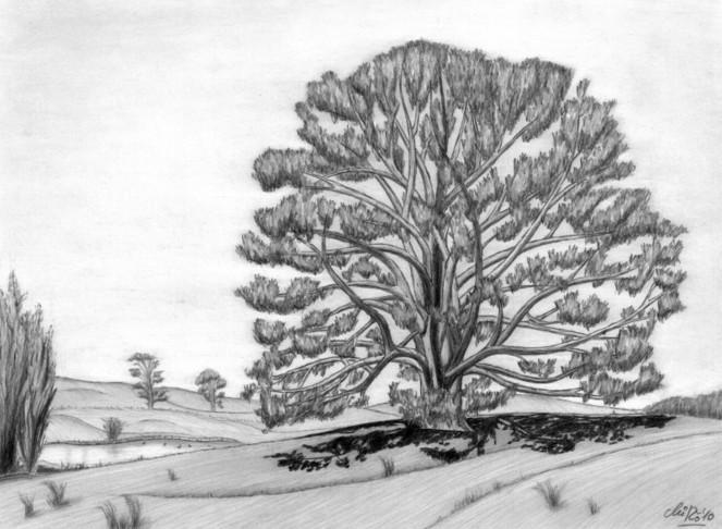 Baum, Natur, Neuseeland, Zeichnungen