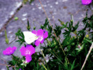 Blumen, Sommer, Schmetterling, Sonne