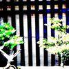 Bonsai, Japanisch, Japan, Fotografie