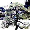 Garten, Japan, Japanisch, Steinlaterne