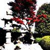 Fotografie, Garten, Japan, Japanisch