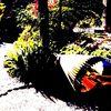 Garten, Japan, Regenschirm, Japanisch