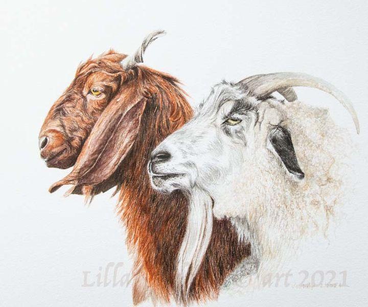 Tuschmalerei, Ziegen, Tierportrait, Tierzeichnung, Zeichnungen,