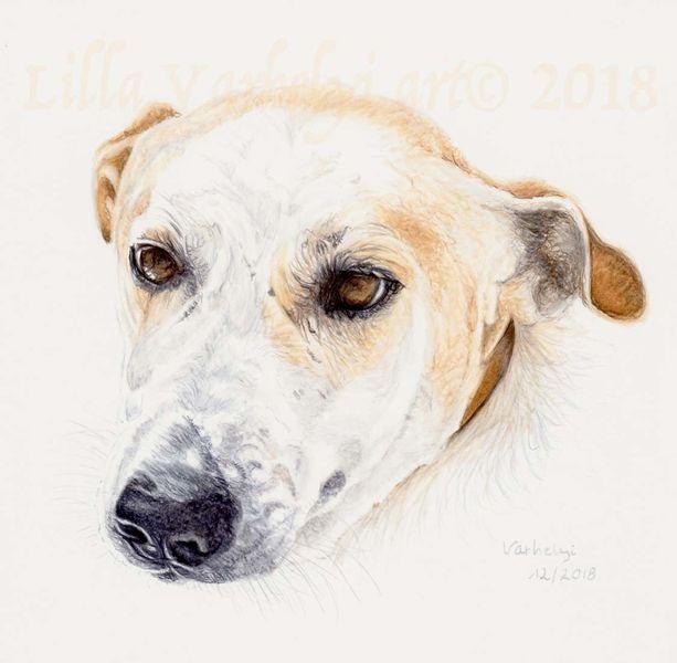 Hund, Tuschezeichnung, Tiere, Tierportrait, Zeichnungen,