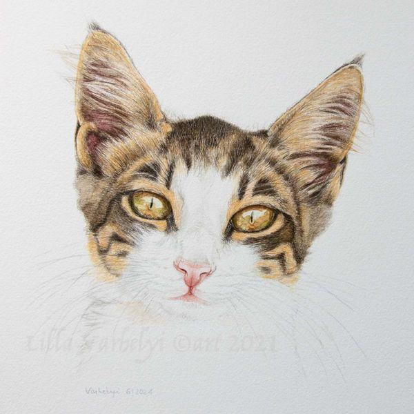 Katze, Tuschmalerei, Ingwer, Zeichnung, Tierportrait, Catdrawing