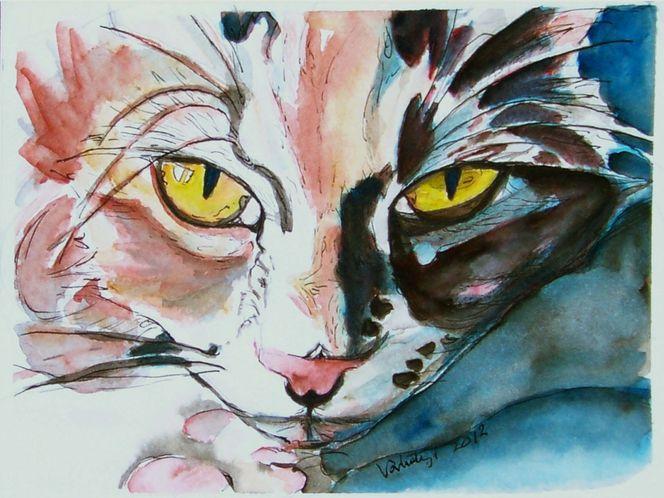 Tierportrait, Teirportrait, Augen, Katze, Engel, Katzenaugen