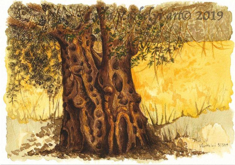 Olivenbaum, Tuschezeichnung, Baumstudie, Baumstamm, Natur, Holz