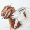 Tierportrait, Ziegen, Tierzeichnung, Tuschmalerei