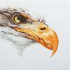 Tuschmalerei, Vogel, Adler, Raubvogel