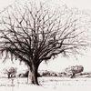 Studie, Tuschmalerei, Natur, Federzeichnung