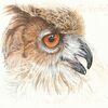 Wildvogel, Vogel, Tuschmalerei, Tierwelt