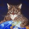 Katze, Blick, Blau, Europa