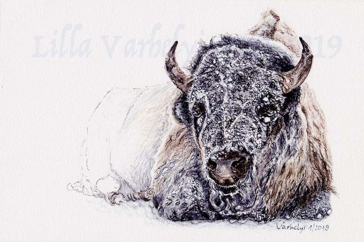 Winter, Tierwelt, Bison, Tiere, Eis, Tusche