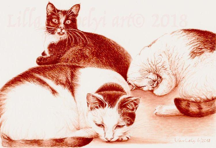 Sienna, Animaldraw, Katze, Tierportrait, Tusche, Monochrom