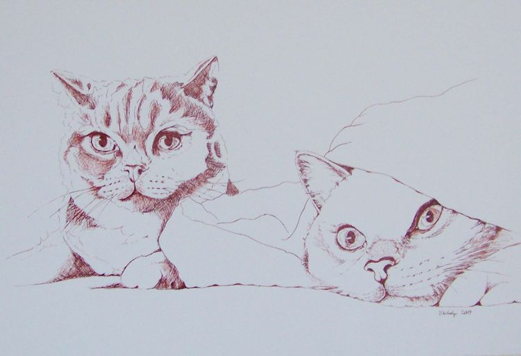Gemütlichkeit, Federzeichnung, Liebe, Tiere, Reduktion, Katze