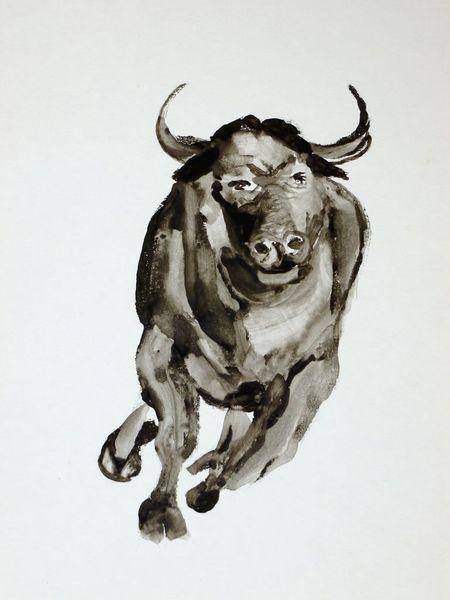 Stier, Freiheit, Schwarz weiß, Schwarzweiß, Malerei, It