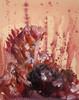 Collage, Frosch, Abstrakt, Ausdruck