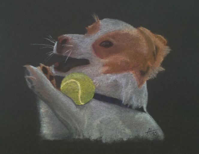 Hund, Hundekopf, Pastellmalerei, Spielender hund, Zeichnungen