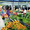 Gemüse, Blumen, Markt, Aquarellmalerei