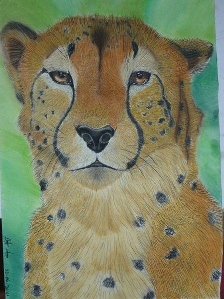 Portrait, Gepard, Tierwelt, Raubtier, Malerei