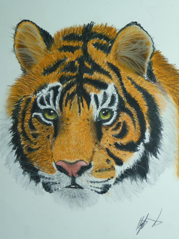 tiger in farbe streifen gesicht katze augen von aley bei kunstnet. Black Bedroom Furniture Sets. Home Design Ideas