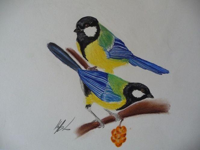 Natur, Pastellmalerei, Vogel, Singvogel, Meise, Malerei