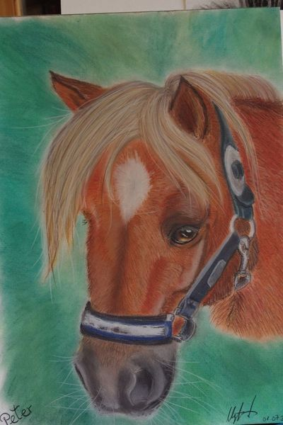 Pastellmalerei, Tiere, Pony, Fuchs, Pferde, Reiten