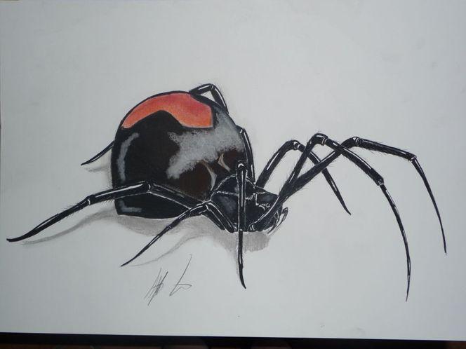 Phobie, Schwarz, Witwe, Natur, Spinne, Bein