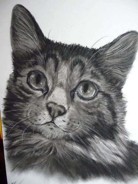 Kohlezeichnung, Gesicht, Portrait, Raubtier, Katze, Kater
