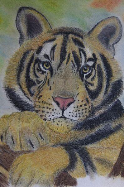 Pastellmalerei, Tiger, Portrait, Tiere, Malerei