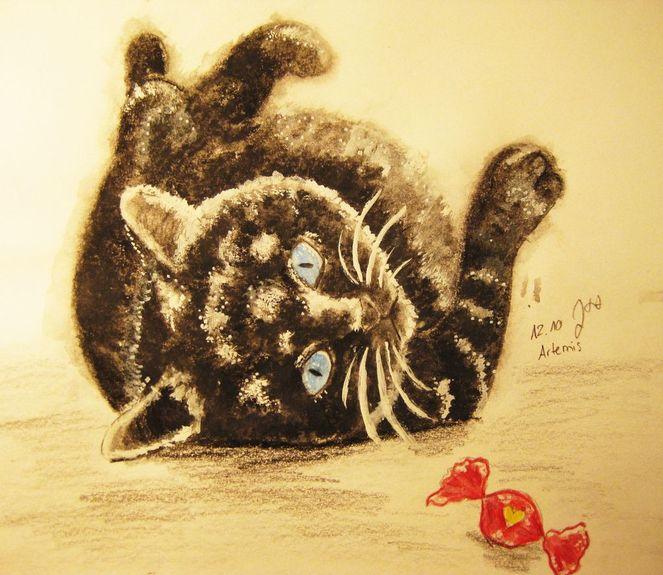 Katze, Artemis, Bonbon, Zeichnungen, Tiere