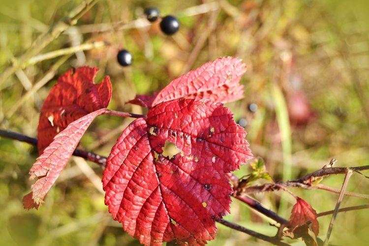 Herbst, Natur, Innehalten, Farben, Indian summer, Laub