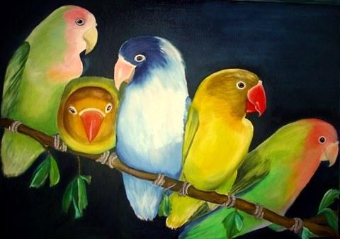 Vogel, Tiere, Australien, Papagei, Zoo, Natur