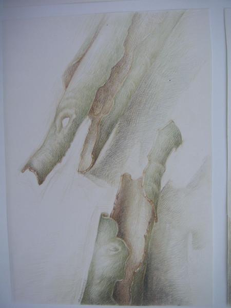 Kommunikation, Studie, Natur, Zeichnung, Naturstudie, Fantasie