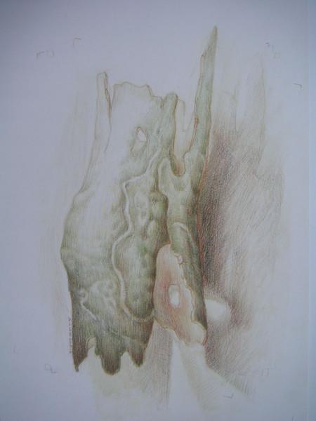 Fantasie, Naturstudie, Rinde, Zeichnung, Figur, Zeichnungen