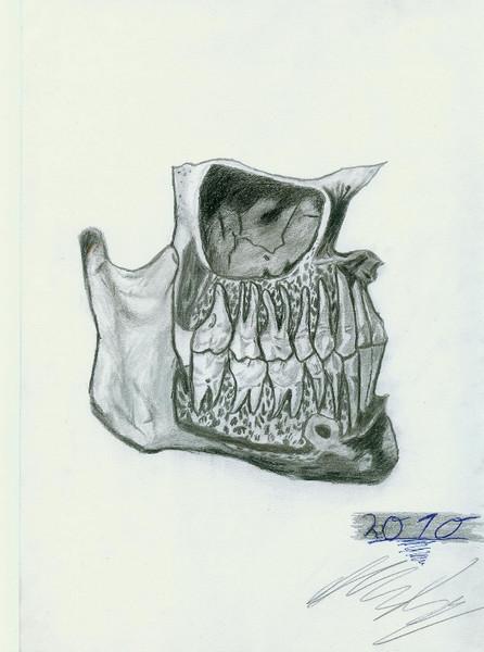Unterkiefer, Knochen, Zeichnung, Anatomie, Zähne, Skizze