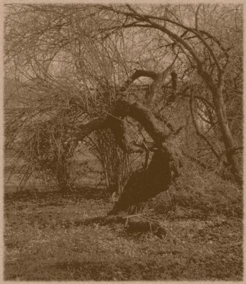 Fotografie, Natur, Pflanzen, Analog, Botanik, Baum