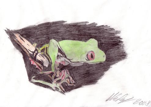 Buntstifte, Tiere, Zeichnung, Frosch, Laubfrosch, Tierzeichnung
