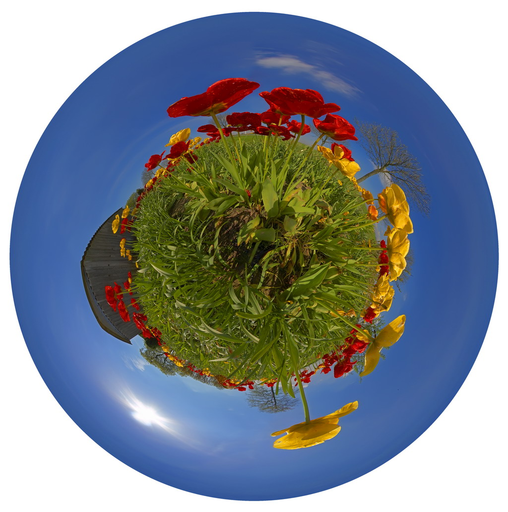 bild tulpen blumen pflanzen perspektive von virtugraf. Black Bedroom Furniture Sets. Home Design Ideas
