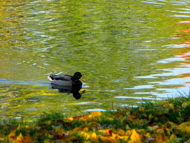 Halle, Herbst, Saale, Fotografie, Kunstfotografie, Fluss