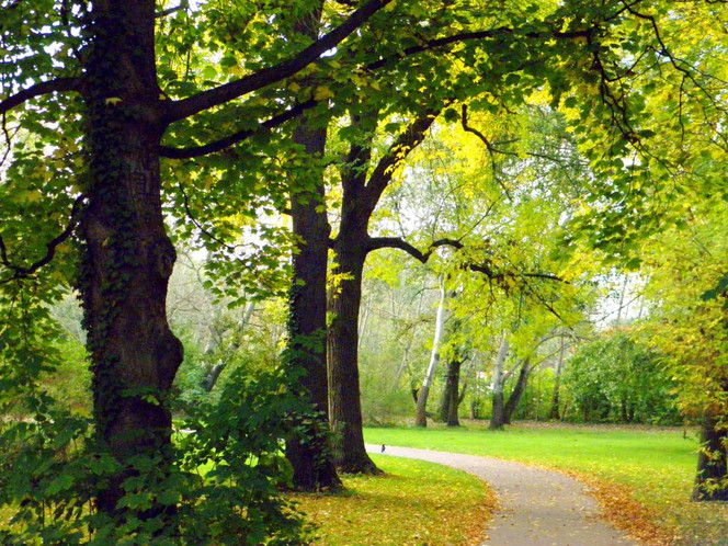 Herbst, Halle, Saale, Fotografie, Park, Kunstfotografie