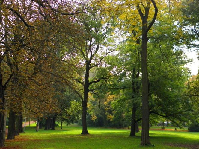 Parkanlage, Kunstfotografie, Tanz, Baum, Halle, Herbst