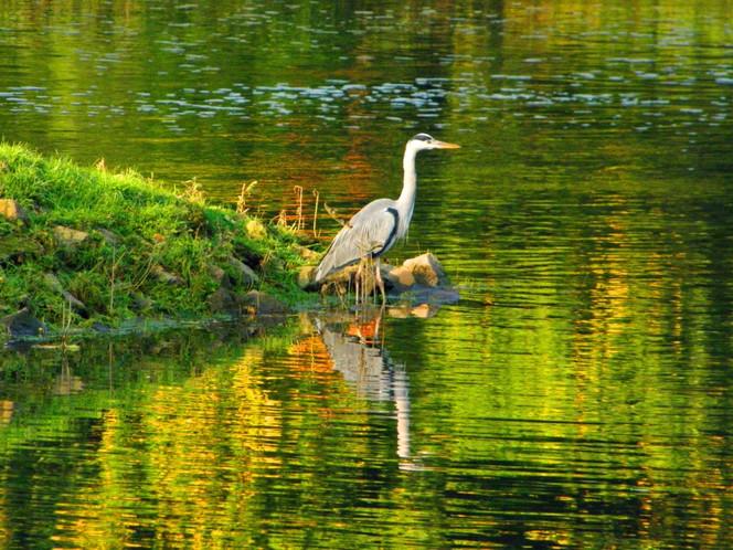 Saale, Fotografie, Fluss, Kunstfotografie, Wasser, Halle