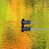 Herbst, Saale, Fotografie, Fluss
